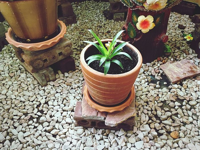 Garden Garden Architecture Potted Plant Growth Plant Flower Flower Pot Nature Freshness Leaf Beauty In Nature No People Outdoors Day Close-up Fragility