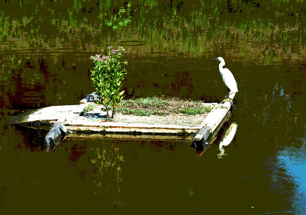 reflection, water, animals in the wild, waterfront, animal themes, day, bird, lake, outdoors, nature, one animal, no people, animal wildlife, perching, beauty in nature