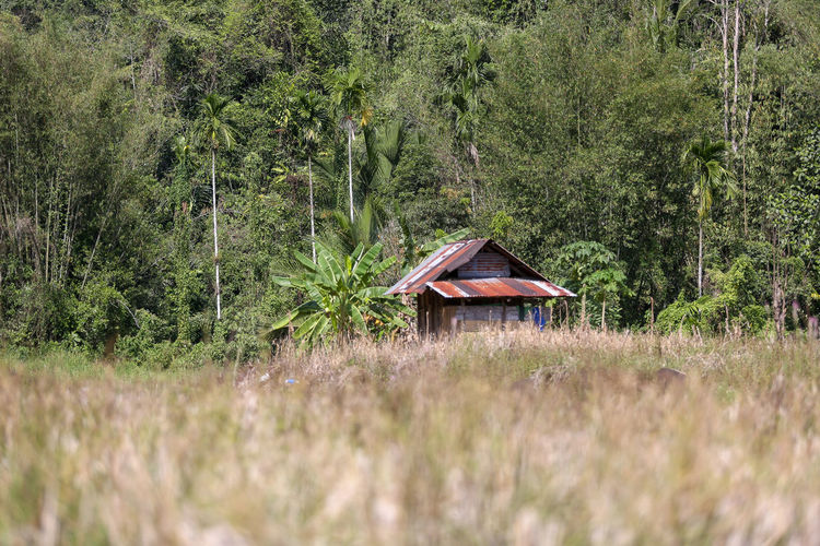 Architecture Field Non-urban Scene Grass Landscape No People Tranquil Scene Beauty In Nature Built Structure Forest Day Green Color Tree Growth Land Scenics - Nature Outdoors Nature Tranquility Cabin Plant