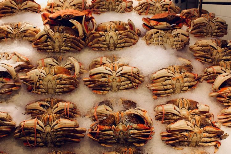 Close up of crabs for sale at market