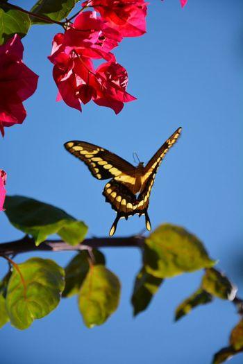 Naturelovers Butterflies Taking Photos Garden Photography My Best Photo 2015