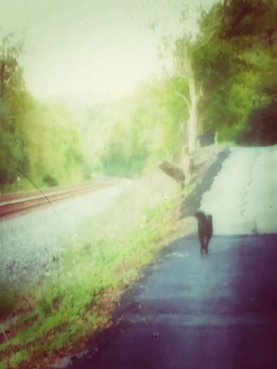Capture The Moment Walking Peace Time To Reflect Beautiful World Nature Dog❤ Railroad Road