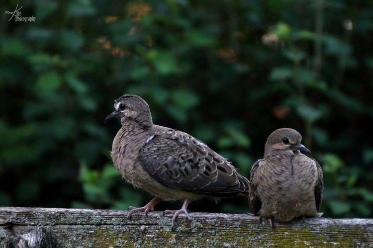 Nature Birds Eye4photography  Ontario