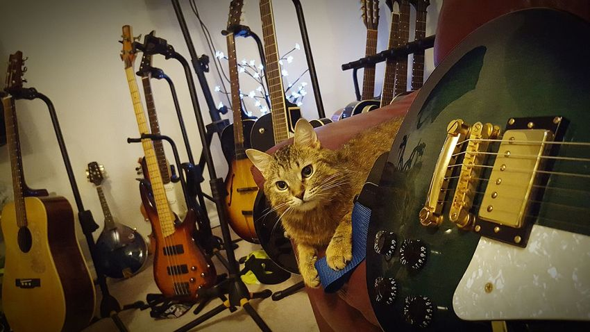 Hanging Out Check This Out Hello World Cheese! Relaxing Enjoying Life Coco'sPics Rockstar Rescuecat Guitars Houseofguitars My Boy Capo Cats Of EyeEm Guitarlove Guitar That View Guitar Love Guitar Addiction EyeEm Animal Lover Cat Lovers Capokitty Cat♡