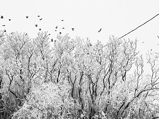 Oh that the world would be frozen... And you should fly away, into the grey misty morning. Would you come back again, should the sun shine again? Monochrome Bnw_collection Fortheloveofblackandwhite Texas Panhandle Untold Stories EyeEm Tadaa Community Landscape_Collection EyeEm Nature Lover Naturelovers Eye4photography  Showcase: January Animal Photography Frosty Mornings Frost And Fog South For The Winter White Spirit Darkness And Light Light And Love Always ☺️