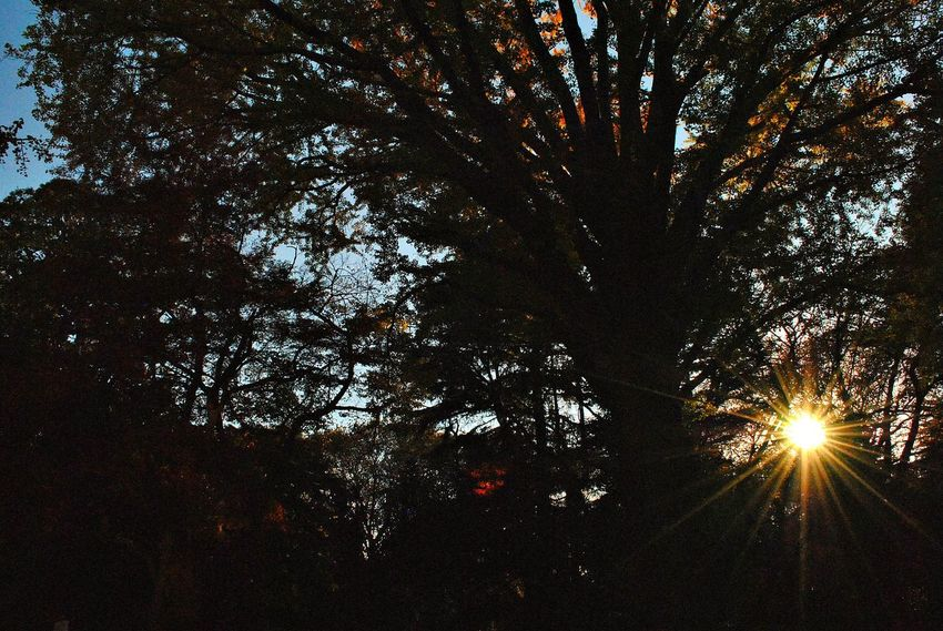 Beauty In Nature Branch Day Forest Growth Low Angle View Nature No People Outdoors Scenics Silhouette Sky Sun Sunbeam Sunlight Sunset Tranquil Scene Tranquility Tree Tree Trunk