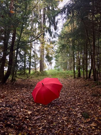 I am dancing in the rain Rainy Days Daylight Coloured Leafs Autumn Tree Plant Land Red Nature Day Umbrella Tranquility No People Forest Tranquil Scene Beauty In Nature