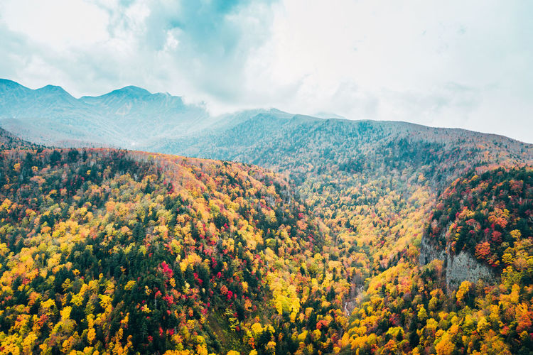 Daisetsuzan Beauty In Nature Plant Sky Scenics - Nature Mountain Tranquility Tranquil Scene Tree Autumn Nature Cloud - Sky Growth Day Idyllic Non-urban Scene Landscape No People Environment Change Mountain Range Outdoors Autumn Collection