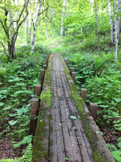 松原湖高原 Japan Nagano Saku Koumi Nature Nature_collection Nature Photography Naturelovers Mountain Mountains Forest Forestwalk Forest Photography