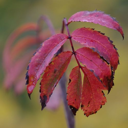 Close-up of autumnal leaves on plant