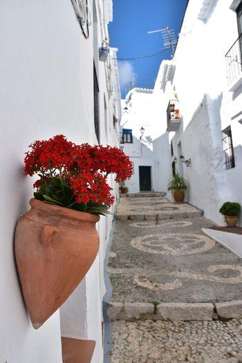 Flowers SPAIN Street Terracotta Cobblestones Mediterranean