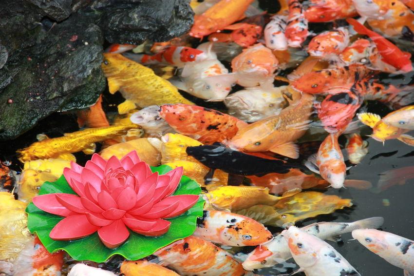 Nature Shanghai Shanghai, China Fish Shanghailife Shanghai❤