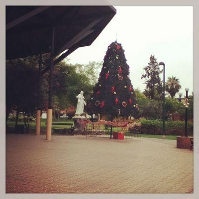 Navidad en San Borja Xmas Navidadperuana Igersperu