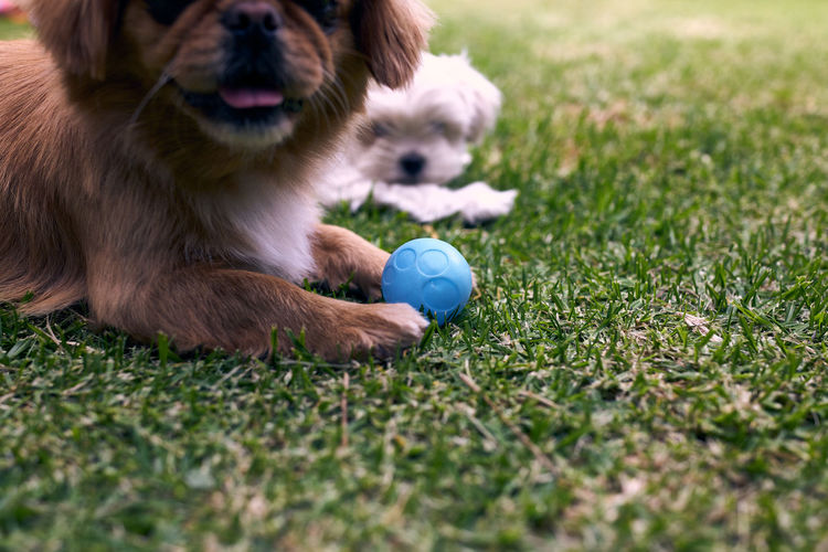 Dog with ball on field