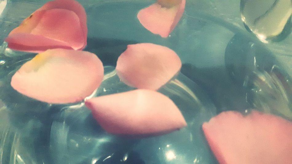 Rosepetals Pinkrose Water Inthewater Close-up