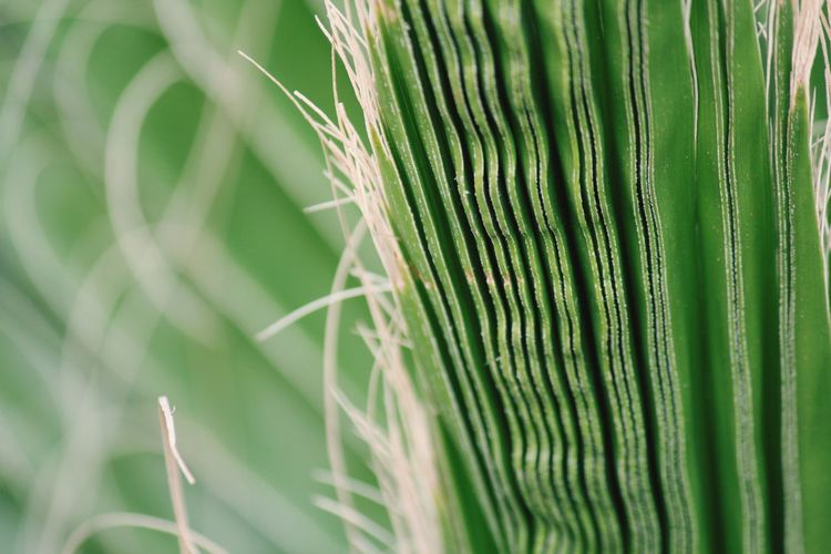 Close-up of crops
