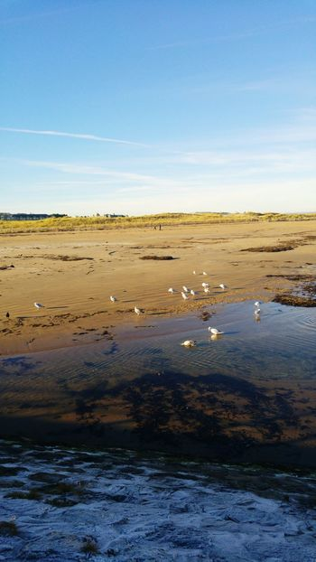 Water Outdoors Sky Nature Cold And Sunny  Frozen Seagulls Ravens Bathing Beach West Sands St Andrews 3XSPUnity