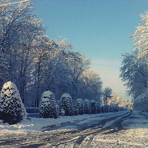 Cold Winter ❄⛄ Cold Day Snow Winter Eyem Best Shots Hello World First Eyeem Photo Snowflake @michaelfaerber
