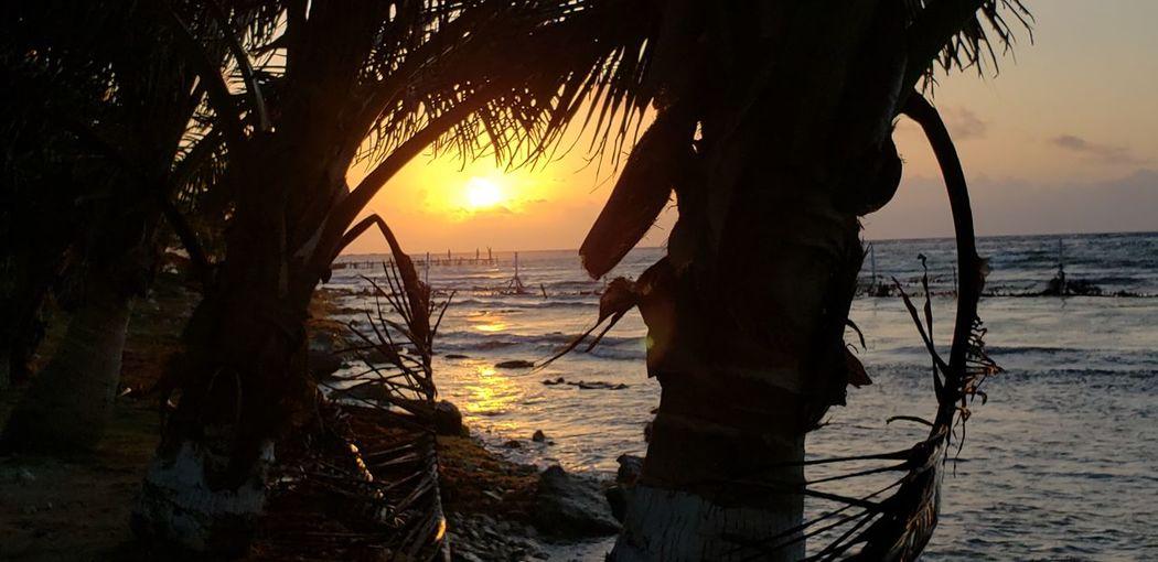 The Traveler - 2019 EyeEm Awards Tree Water Sea Sunset Beach Beauty Arrival Silhouette Sand Sun