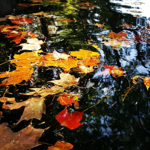 Water Reflection Outdoors Floating On Water Multi Colored Close-up Nature Fall Colors Fall Beauty The Week On EyeEm Lost In The Landscape