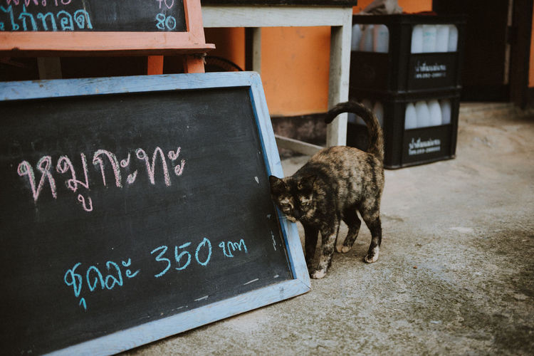 cat at street Pets Menu Text Communication Animal Animal Themes Mammal Western Script Domestic Domestic Animals One Animal Sign Board Aggression  Script Information Sign No People Canine Vertebrate Message Blackboard  Information Cat Cat Lovers Streetphotography