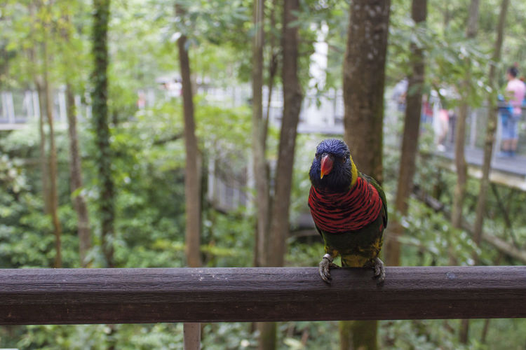 Animal Themes Animal Tree One Animal Bird Focus On Foreground Railing Perching No People Plant Parrot Day