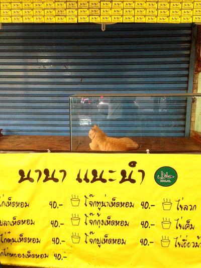 Streettun Cat Gag