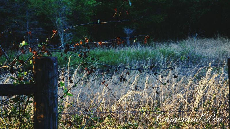The Vine Outdoors Nature Grass No People Tree Day Rural Scene Sky Flower Vine Old Fences EyeEmNewHere