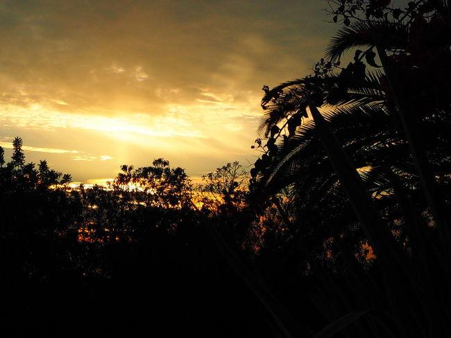 Sunset Light And Shadow Sunset Garden Nofilter Algarve