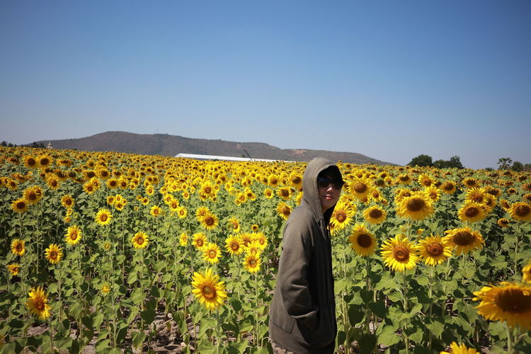 Portrait of woman standing amidst sunflower field against clear sky