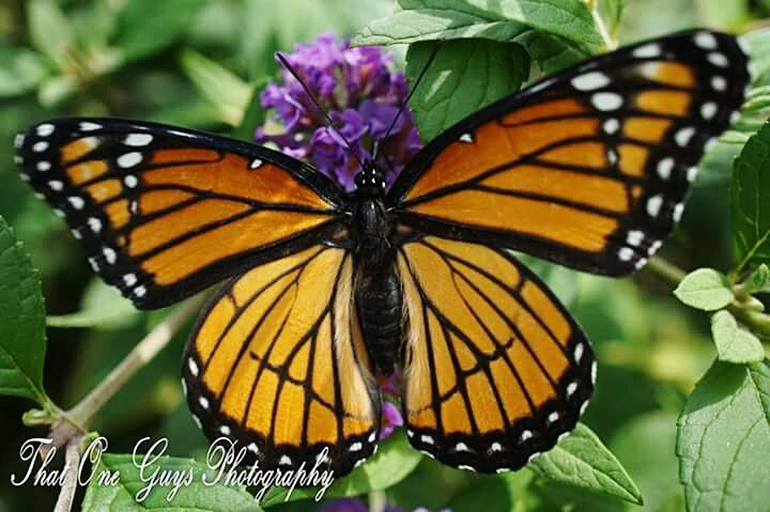 butterfly - insect, insect, animals in the wild, butterfly, one animal, animal themes, wildlife, animal markings, close-up, natural pattern, beauty in nature, focus on foreground, animal wing, flower, nature, plant, leaf, growth, fragility, pollination