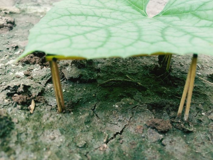 No People Leaf Nature Outdoors Close-up Beauty In Nature House Day High Angle View Plant Fragility Animal Themes
