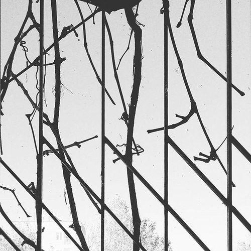 Window Sky Branches Iron Fence Prison Ivy Fall Atumn Cold Bw Blackandwhite پاییز سرما پنجره حصار آهن شاخه ساقه پیچک خشک آسمان  سیاه_سفید
