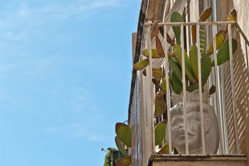 Giudecca - Ortigia Architecture Built Structure Leaf Building Exterior Blue Plant Growth Sky Green Color Day Tranquility No People Freshness Beauty In Nature Green Cloud - Sky Architecture Architectural Feature Architecture_collection Architectural Detail Discover Your City Walking Around The City  Architecturelovers