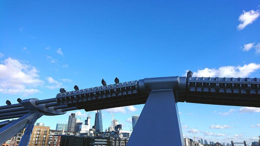 Millenium Bridge Bridge - Man Made Structure Day Sky Outdoors No People Pigeons Birds Skyline London Business Finance And Industry Skyscraper View