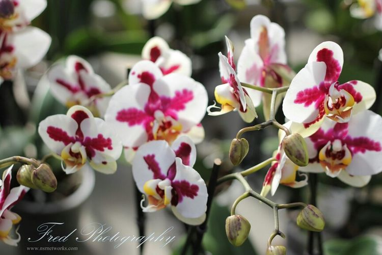 Flowers Flower Fleurs Orchids Flower Porn Orchidee. Fleur