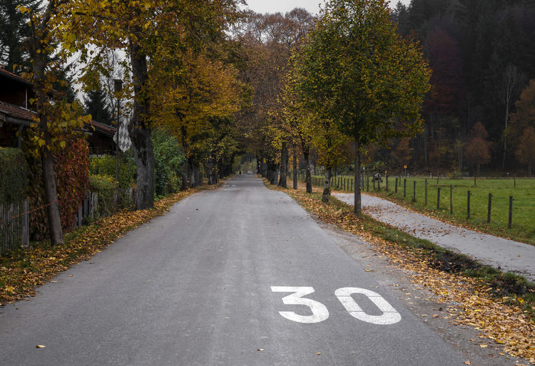Road in a residential area near the bavarian town Fussen, in an autumnal scenery with the tall trees surrounding the street Autumn colors Road Autumn Empty Road Fall Leaves Fallen Leaves Marking Nature No People Restriction Road Road Marking Safety Sign Speed Limit Symbol The Way Forward Tranquility Tree Treelined