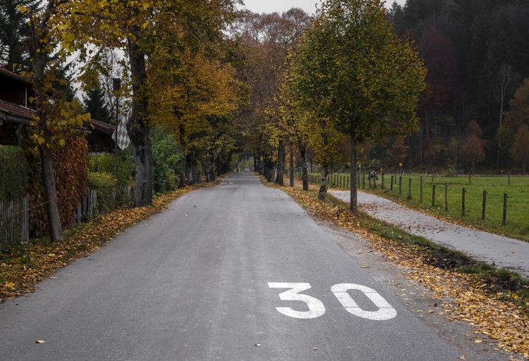 Road amidst autumn trees