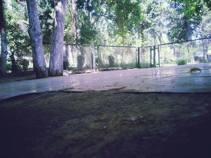 Wilaya tiaret jardin