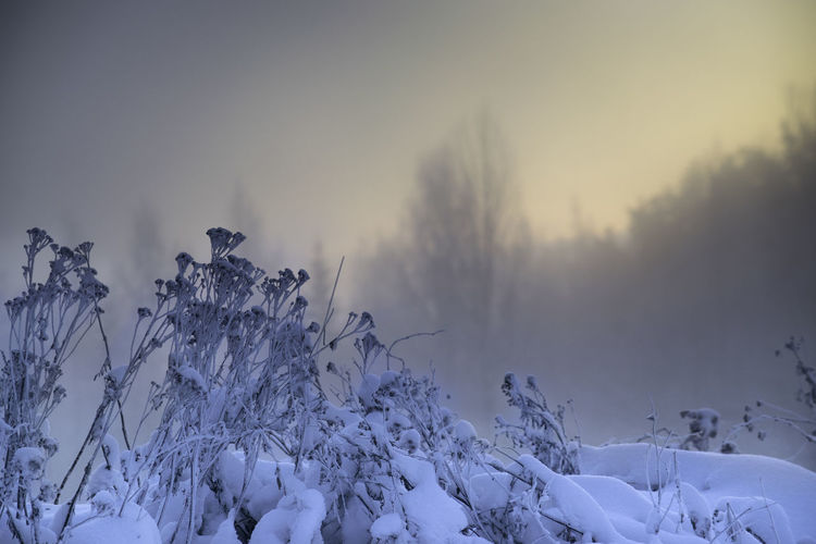 Beauty In Nature Cold Temperature Day Hello World Nature No People Outdoors Sky Snow Taking Photos Tree Winter