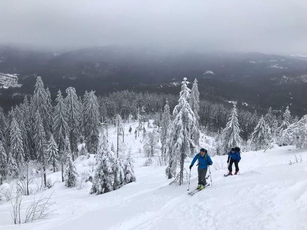 Arber Tourengehen Tourenski Skiing Snow Cold Temperature Winter Mountain Tree Leisure Activity Scenics - Nature