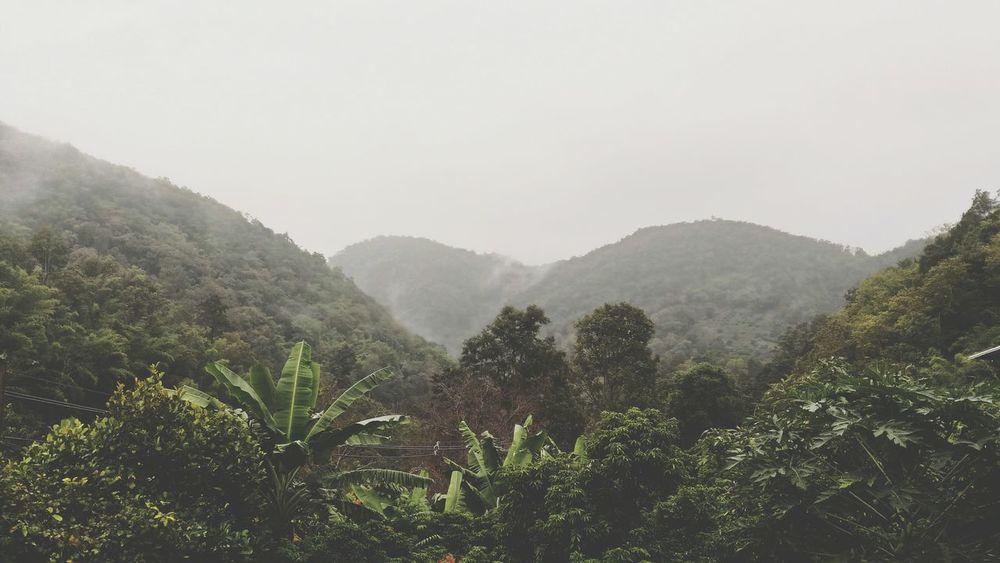 EyeEm Selects เขาช้างหมอบ ดอยอ่างขางเชียงใหม่ Mountain Nature Tree Outdoors ช้าง Elelphants