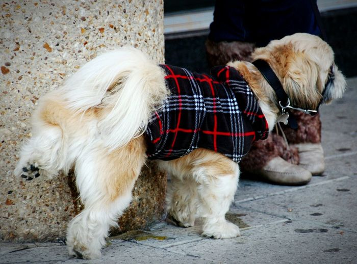Animal Themes Domestic Animals Pets One Animal Dog Outdoors Pet Clothing Tartan Dog Coat