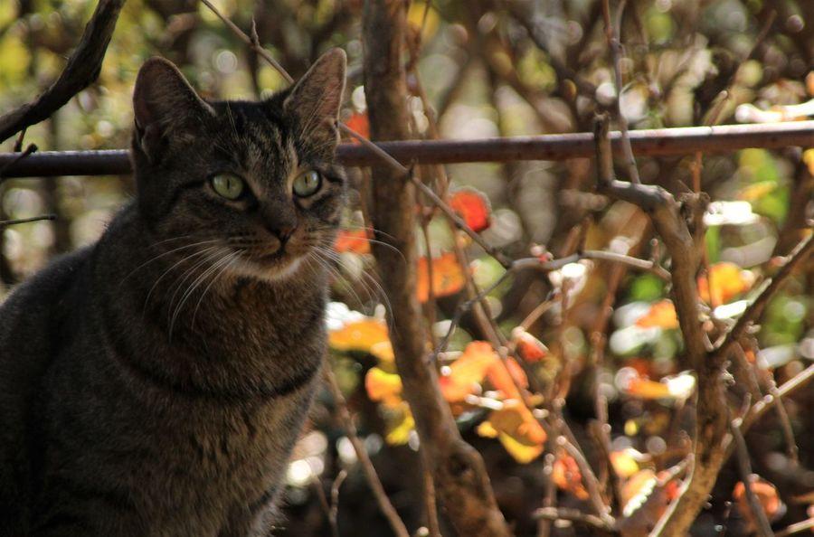 Cat Cats Pretty Pretty Eyes Animal Animals Animal Themes One Animal Animal Head