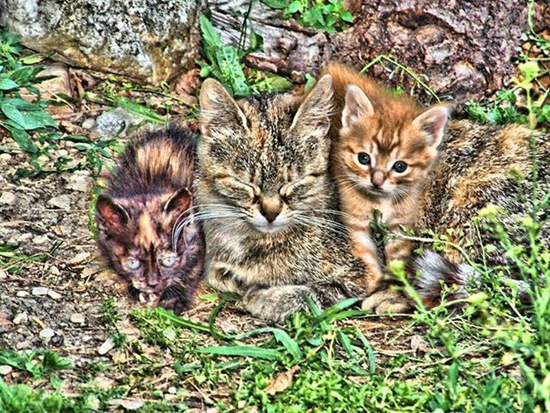 Gattini in hdr..😃😻 Love Cats Catstagram Catofinstagram HDR Hdr_captures Ilovehdr Hdr_lovers Pet Petsagram Petofinstagram Gatti Animal Animallovers Instapet Instacat Instacatsgram