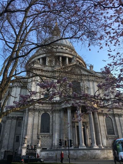 St Paul's Cathedral Walking To Work Spring London St Paul's Cathedral Built Structure Architecture Building Exterior Low Angle View Day Real People Large Group Of People Tree Outdoors Sky People