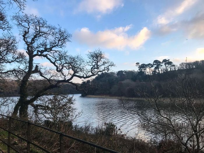 Penrose walk Cornwall Walks Eye Em Nature Lover Shadows Cold Cold Temperature Lake A Cold Bright Jabuary Day Tree Water Nature Sky Beauty In Nature Scenics Tranquility Bare Tree Tranquil Scene Outdoors Cloud - Sky Growth Landscape