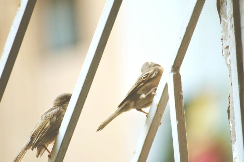 Birds🐦⛅ Relaxing Hi! Hanging Out Sparrow Birdingphotography Bird Photography Bird Watching Taking Photos Grill Birdview Sparrow Bird Sparrow Watch Simplicity Freedom Fly Away Freedom To Fly