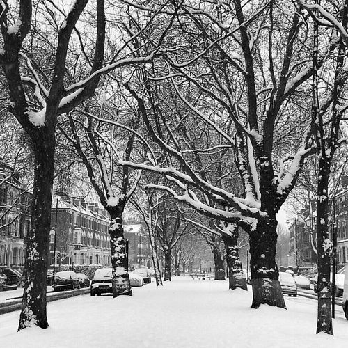 Nature Blackandwhite Tree Snow London Bws_worldwide Snowtography