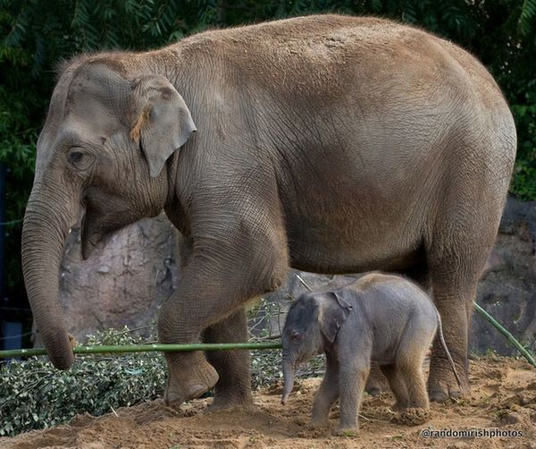 The newest - and cutest - addition to Dublin Zoo. Wild Life Elephant EyeEm Nature Lover Ireland
